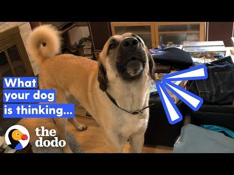 How To Tell If Your Dog's Happy (It Has Nothing To Do With His Tail)