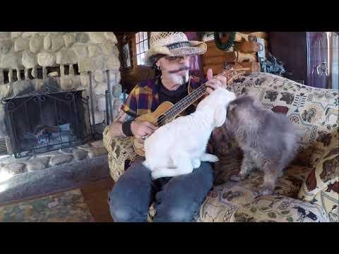 Baby Lamb and Kitty Love Live Music #Video