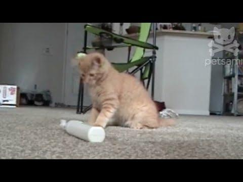 Kitten Slaps Electric Toothbrush Over And Over And...