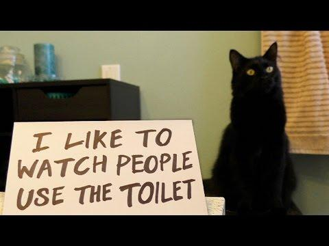 Ultimate Cat Shaming!