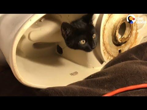 Kitten Gets His Head Stuck In A Toilet