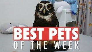 Best Pets of the Week | August 2018 Week 4