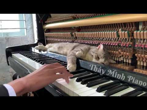 Meowzart - Rondo Alla Turca Meowssage Video