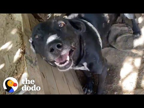 Takis Finds Dog Who Spent His Life On A Chain #Video