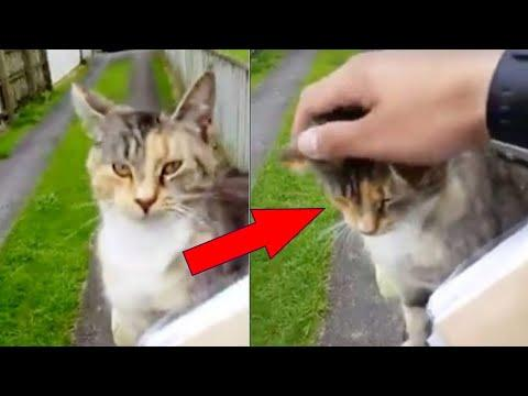 Nobody Believes The Mailman That One Cat Does This Every Day Video