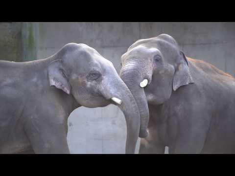 Early Morning Elephant Antics
