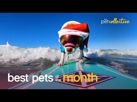 Best Pets of the Month Video (March 2021)