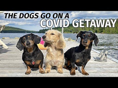 Ep#5: The Dogs Go to the Cottage for a COVID GETAWAY Video.
