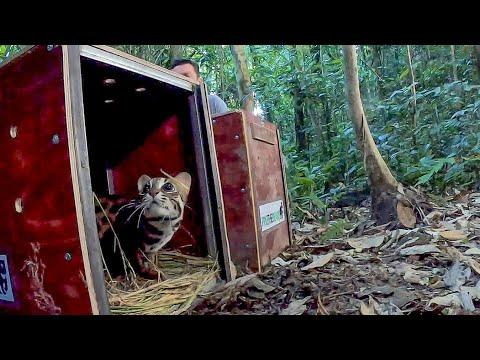 Releasing Rescued Animals Back Into The Wild Video | BBC Earth