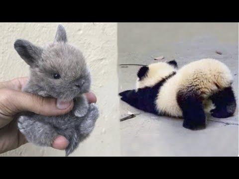 Cutest baby animals Videos Compilation Cute moment of the Animals - Cutest Animals 2021