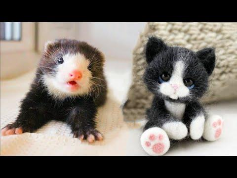 Cutest baby animals Videos Compilation Cute moment of the Animals - Cutest Animals #18