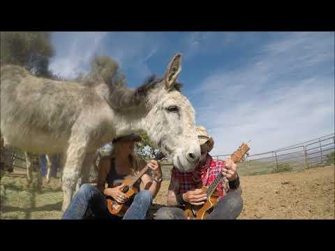 Hazel the Donkey gets a Duet #Video