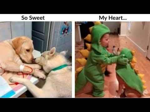 Dogs Pics That Will Make Your Day Better