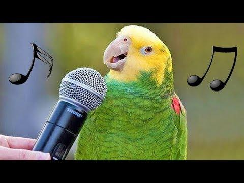 Funny Birds Sing, Dance & Imitate Sounds – Parrots Bark, Meow, Mimic Baby, Phone & Alarm Video