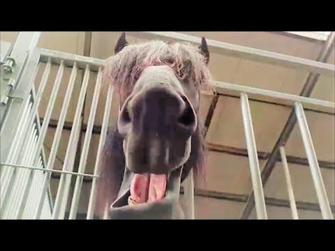Funny Horse Bauke! LOL!! Friesian Horse