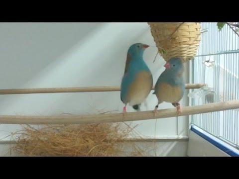 Hidden Bird Tap-Dancing Behavior Revealed In Slow-Motion Footage