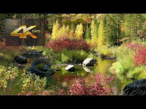 Autumn Foliage near Leavenworth WA 20181012 4K UHD