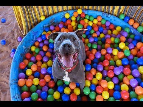 Puppies and Dogs Playing In Ball Pits - Ball Pit Surprise Compilation (2019)