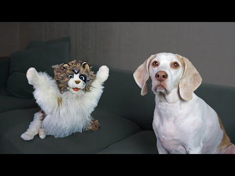 Dog vs Zombie Cat Prank! Funny Dogs Maymo & Potpie Zombie Cat Pranks