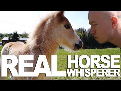 Horse Whisperer - Rudi Rok