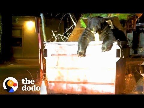 Huge Bear Trapped In Dumpster Helped By Cops