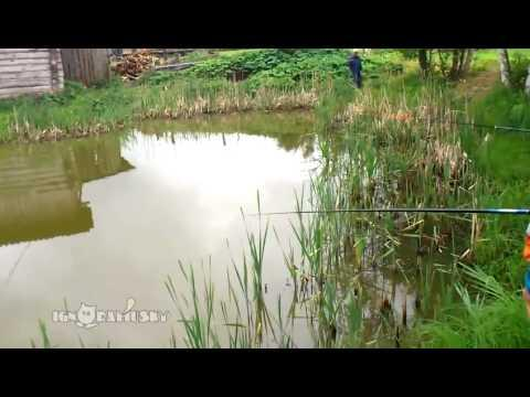 This Sneaky Cat Knows How To Catch Fish