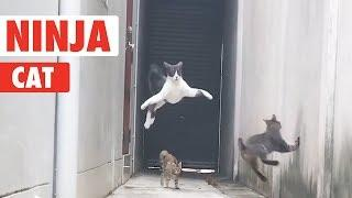Ninja Cat! | Catch Me If You Can