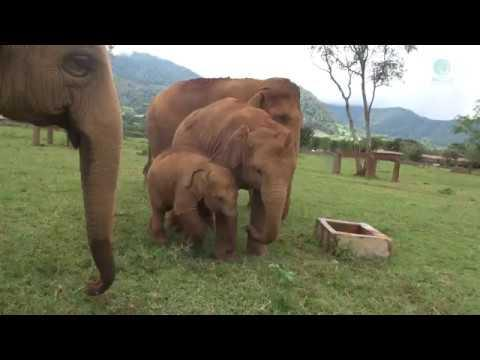 Elephant Keeps Baby From Well