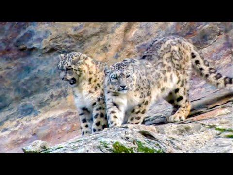 5 Incredible Animals That Could Go Extinct In Your Lifetime | BBC Earth