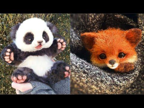 Cute baby animals Videos Compilation cutest moment of the animals - Animals Soo Cute! #1