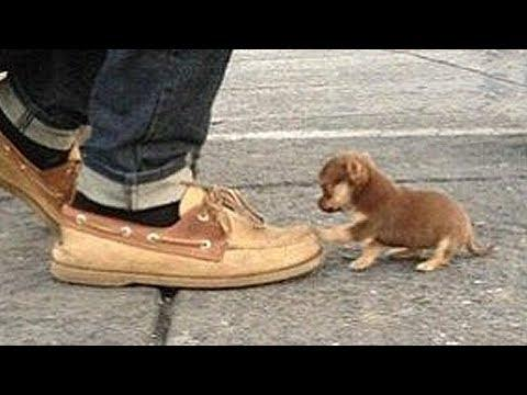 The Smallest Animals in the World