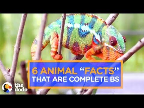 6 Animal Facts That Are Completely FALSE | The Dodo