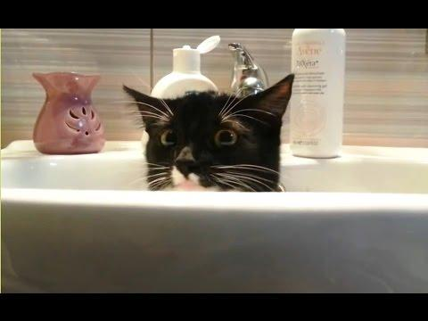 Cats Who Want Some Privacy Compilation