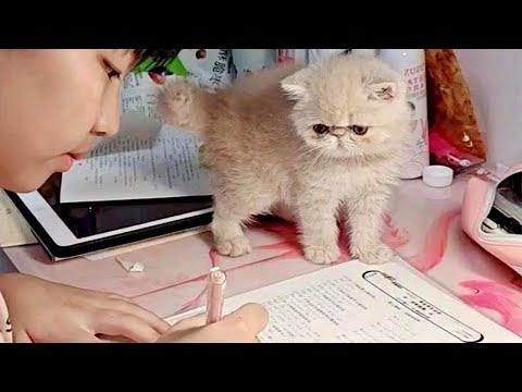 This Tiny Kitten Is the Best Homework Buddy Around Video