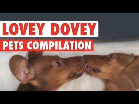 Most Heartwarming Pet Compilation || Lovey Dovey Pets