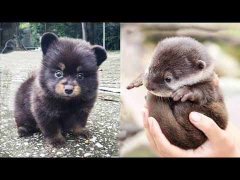 Cutest baby animals Videos Compilation Cute moment of the Animals - Cutest Animals #30