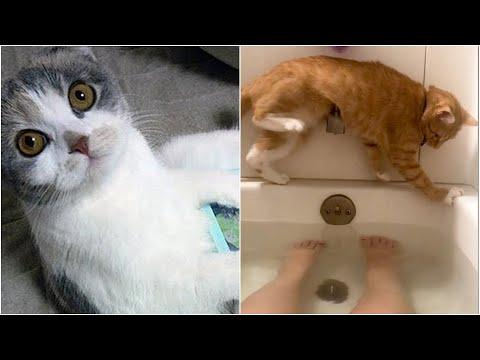 Cats that will make you LAUGH all day! | Best Viral Cat Fail Videos