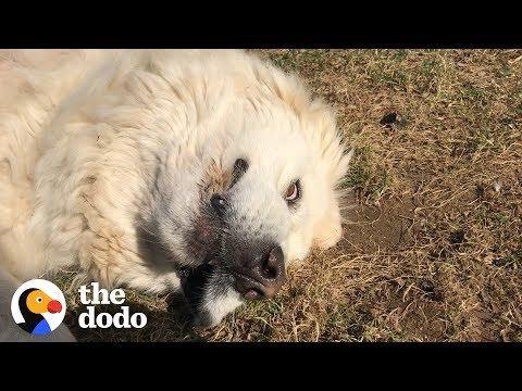Dog Refuses To Get Inside  | The Dodo