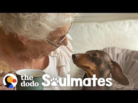 84-Year-Old Lady Is Best Friends With This Pup