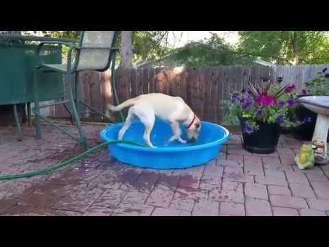 Maddie The Dog Filling Up Her Pool