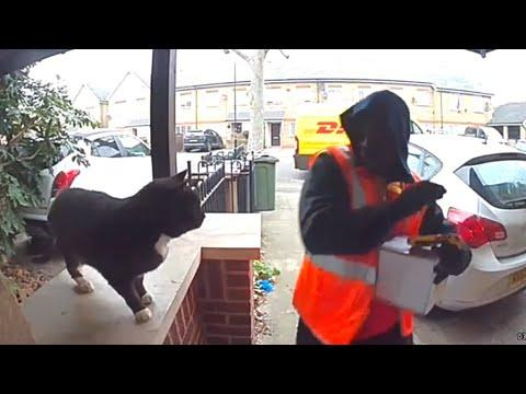 Friendly Cat Scares Away Delivery Man Video. Your Daily Dose Of Internet.
