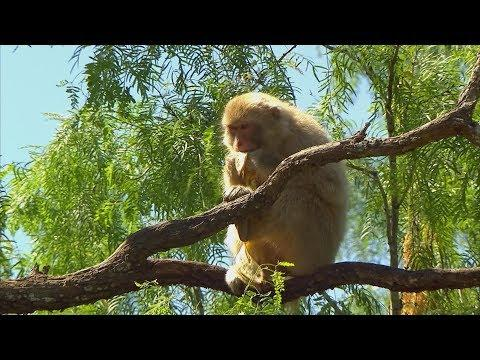 Born Free Primate Sanctuary (Texas Country Reporter)