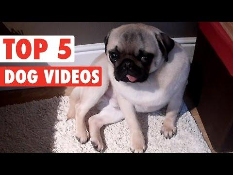 Top 5 Dog Videos || Feb 19 2016