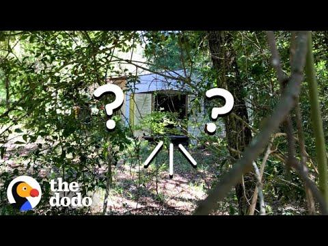 Woman Hears Tiniest Cries Coming From A Shed | The Dodo
