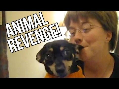 21 Animals Exacting Their Revenge