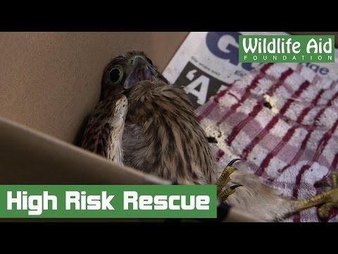 Dangerous Treetop Rescue
