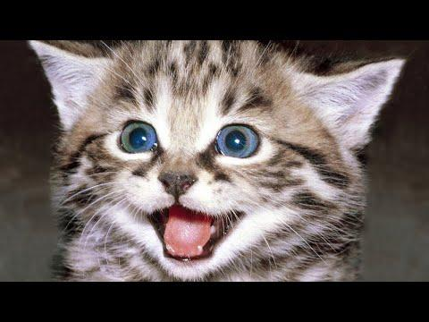Happy Cats Meowing – Meowing Cat Videos – Cats Meow Kittens Meowing Video – Cat Meow Meow Meow
