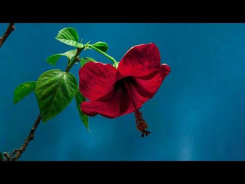 Beautiful Flowers Time Lapse