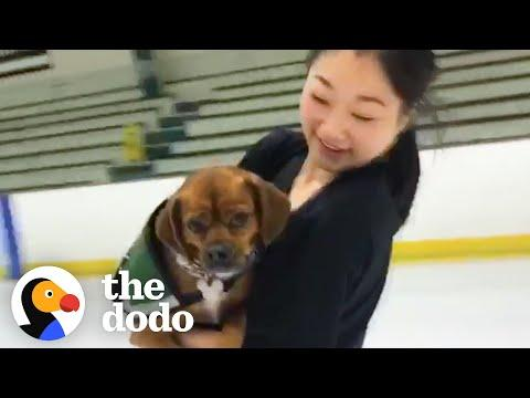 How Olympic Figure Skater Mirai Nagasu's Rescue Dog Helped Her Make The Team #Video