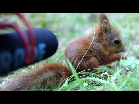 Baby Squirrel Talks Into Microphone Video. Your Daily Dose Of Internet.